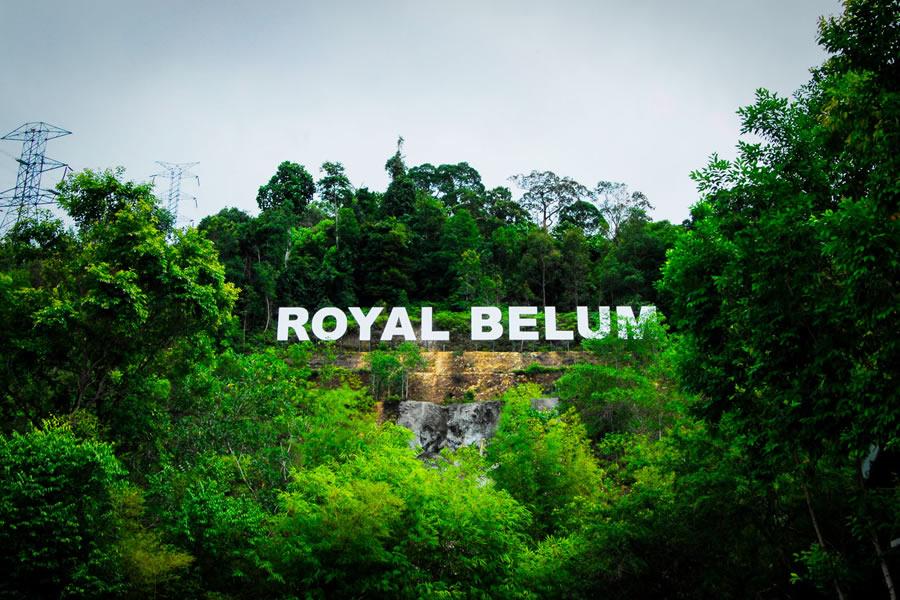 Belumrainforest04