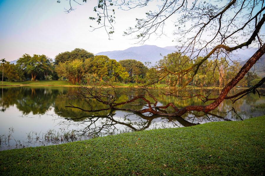 taiping lake garden � tourism perak malaysia
